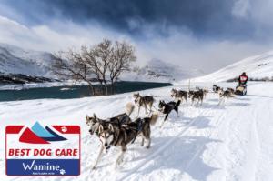 traîneau Grande Odyssée Wamine Best Dog Care