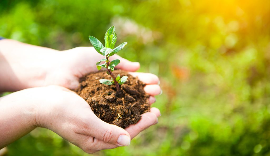 Mains tenant une plante