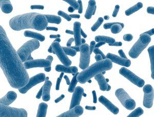 Bactéries bleues