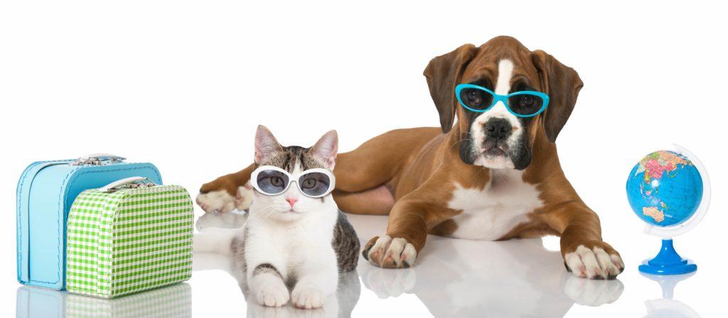 chien chat vacances