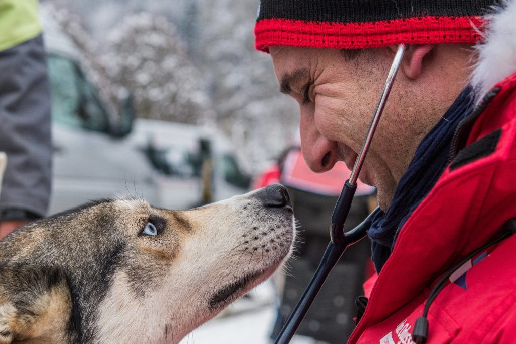 chien vétérinaire LGO