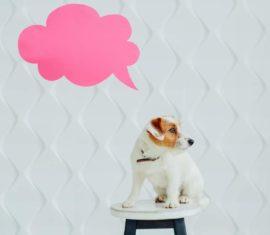 [Vidéo] Témoignages : Utilisation de la phytothérapie dans ma pratique vétérinaire