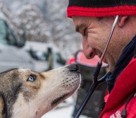 [Vidéo] Wamine s'engage pour bien-être des chiens de la Grande Odyssée