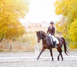 Utilisation de la phytothérapie chez les chevaux de compétition