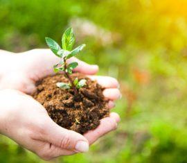 Sourcing et culture des plantes fraîches