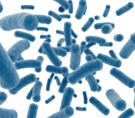 Zoom sur le Microbiote